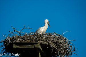 Stork-6